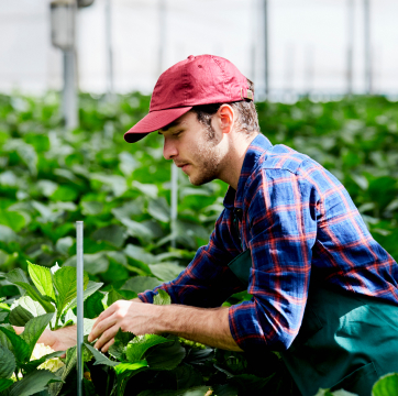 worker inspecting plants